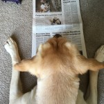 """dog """"reading"""" a paper"""