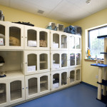 pawspet cattery